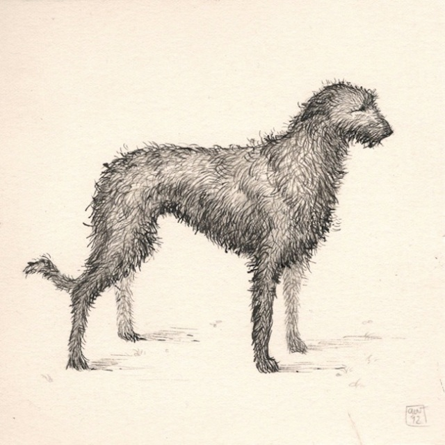 irish wolfhound web