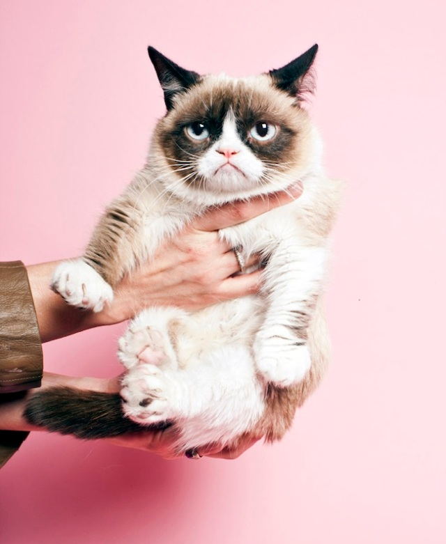 cat-hold
