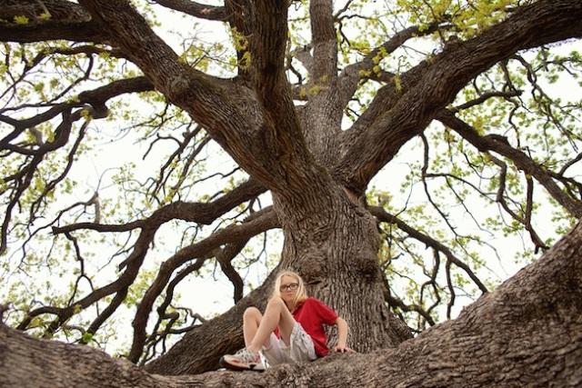 YAMW huge oak tree, anjebridge