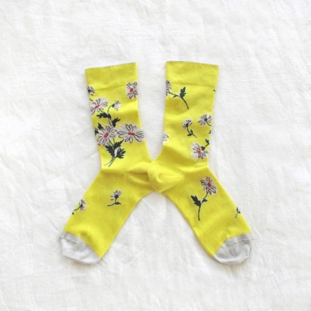 yellow-daisies (1)