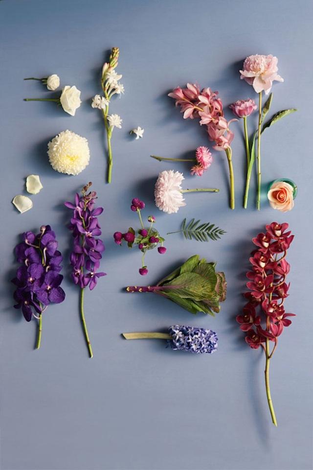 flowers_01_vanessacolyertay_sammcadamcooper