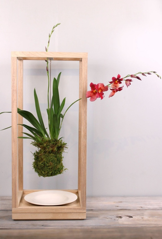 plant_bondage_med_ash_1orchid_sm_1024x1024