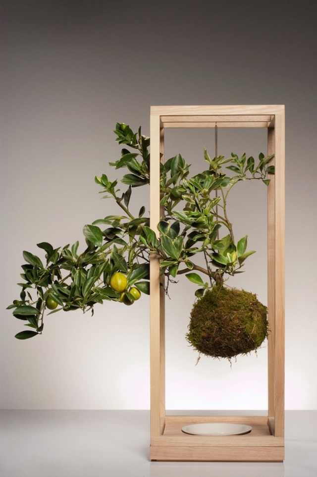 plant_bondage_wood_lg_kumquat_sm_1024x1024