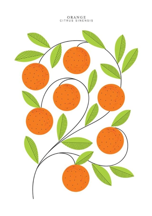 oranges_lowres_1300