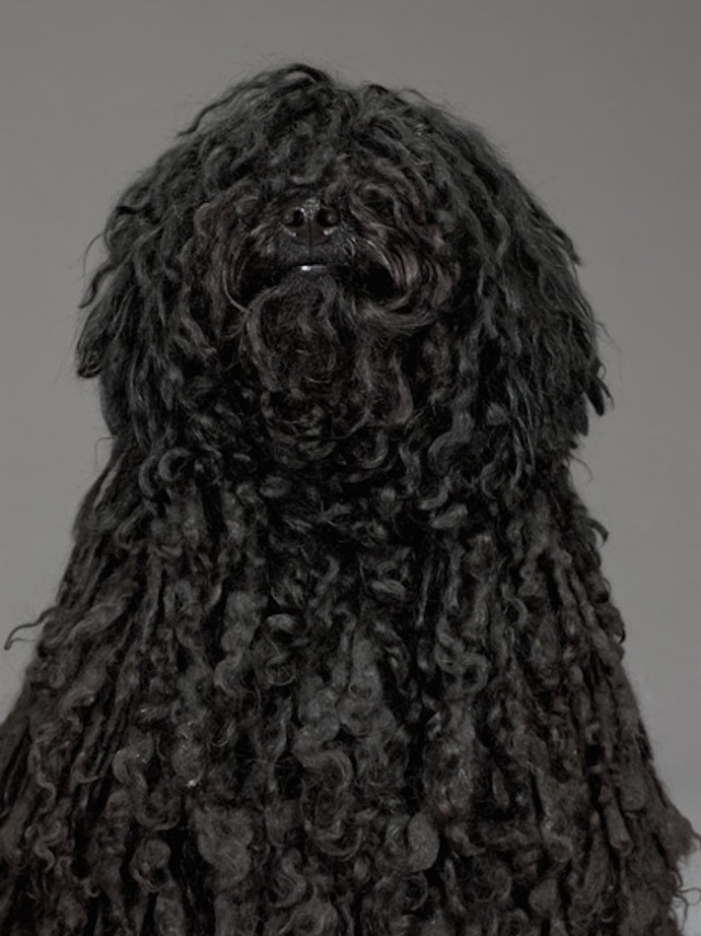51-black-haired-puli-670
