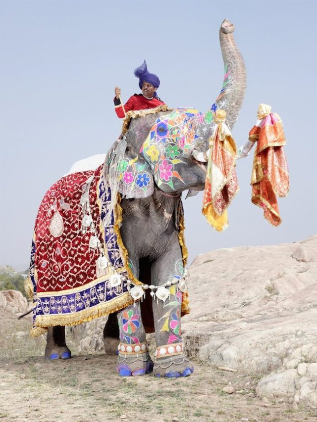 charles-frc3a9ger-elephants3